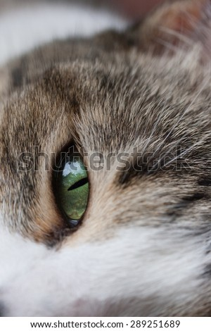 Cat closeup looking with green eye and brown fur - stock photo