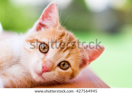Cat color ginger looking in the camera in the home garden with green background - stock photo