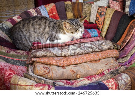 Cat comfortably sleeping in a basket in a fabric shop in Morocco  - stock photo