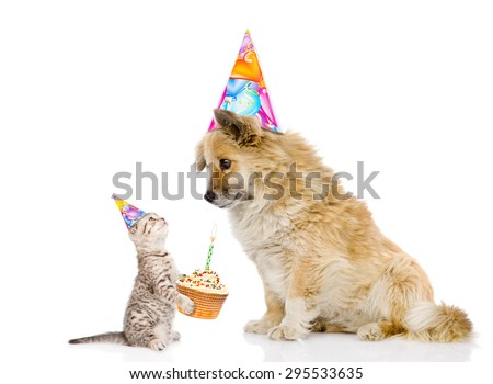 cat congratulates dog on his birthday. isolated on white background - stock photo
