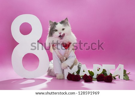 Cat congratulates the spring holiday