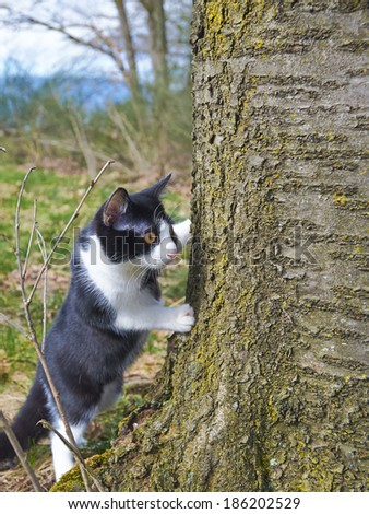 Cat curious behind tree - stock photo