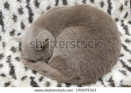 Cat curled a ball and sleeps.