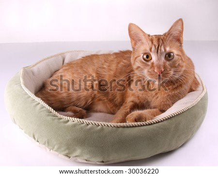 Cat curled up in a pet bed. - stock photo