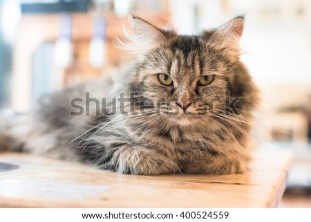 Cat, cute cat ,resting cat on a sofa in colorful blur background, cute funny cat close up, young playful cat on a bed, domestic cat, relaxing cat, cat resting, cat playing at home, elegant cat - stock photo