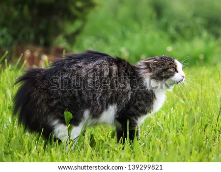 Cat defends its territory - stock photo