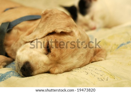 Cat Dog Sleeping - stock photo