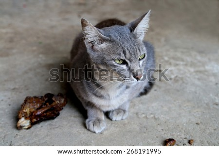 cat don't mind the chicken roast on the floor - stock photo