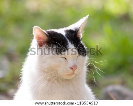 Cat dozing - stock photo