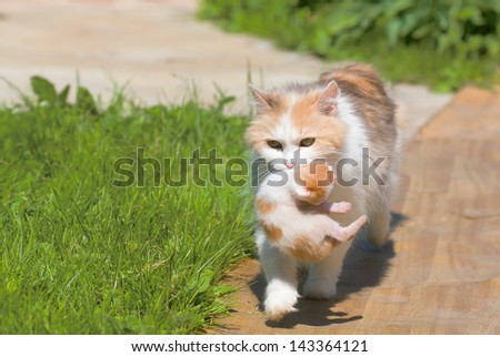 cat drags a kitten in a secluded place - stock photo