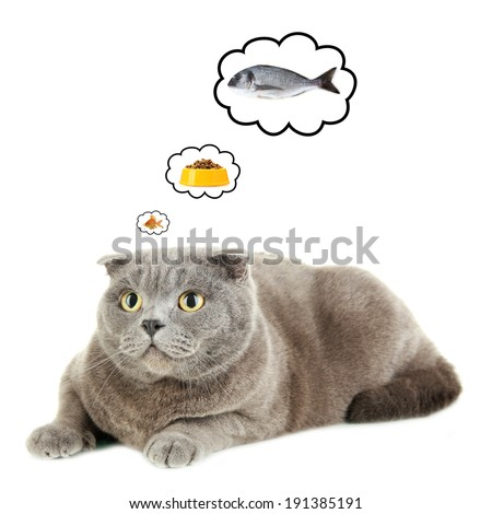 Cat dreaming of delicious food, isolated on white - stock photo
