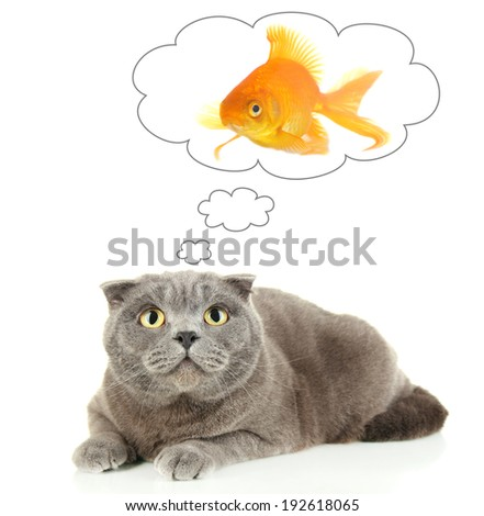 Cat dreaming of gold fish, isolated on white - stock photo