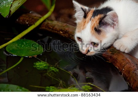 cat drink water - stock photo