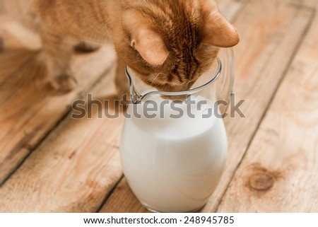 Cat drinking milk from a jug on old wooden table - stock photo