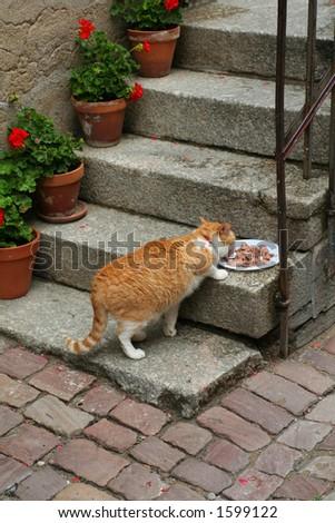 cat eating - stock photo