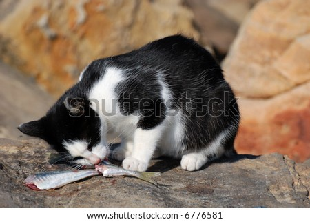Cat eating fish - stock photo