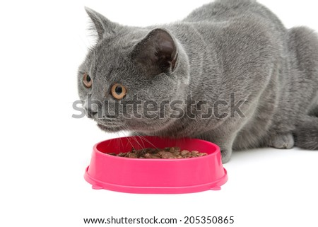 Cat eating food from a bowl on a white background close-up. horizontal photo. - stock photo