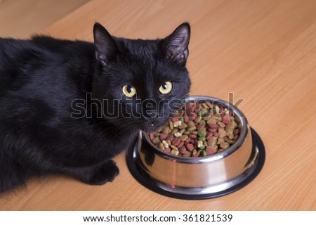 cat eating food in a dish - stock photo