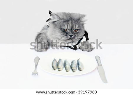 Cat eating food  on white background - stock photo