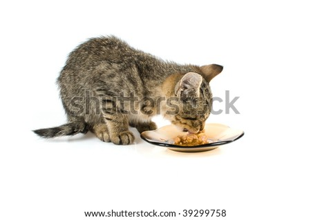 cat eating from the plate