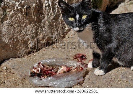 Cat eating meat on the street - stock photo