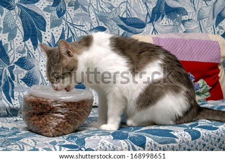 Cat eats dry cat food  - stock photo