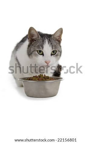 Cat eats from a bowl. Isolated on white background. - stock photo