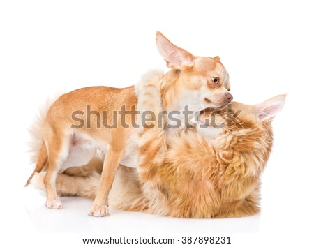 Cat embracing puppy. isolated on white background
