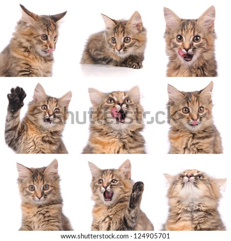 cat emotions composite isolated on white background - stock photo
