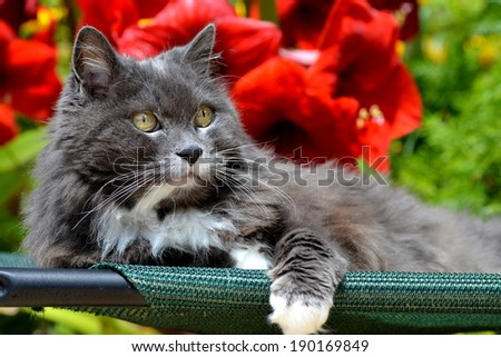 Cat enjoying a beautiful day outdoors / Cat in the garden /Portrait of a cat