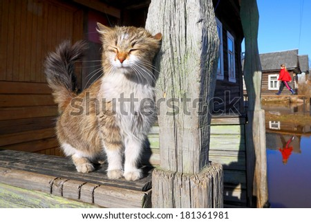 Cat escaping a flood in a village. - stock photo