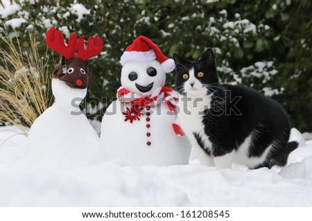 Cat, European Shorthair, beside a Santa snowman - stock photo
