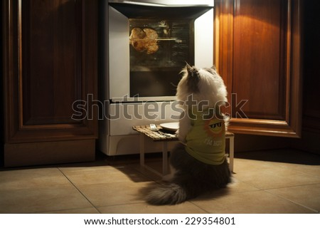 Cat expects cooking chicken - stock photo