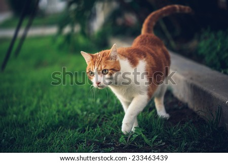 Cat Exploring the Yard - stock photo
