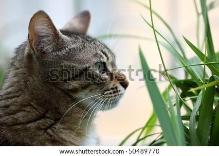 cat eye - stock photo