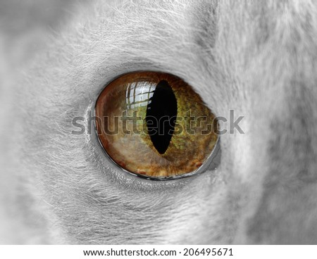 Cat Eye Close-Up - stock photo