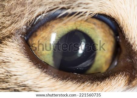 cat eye. close-up - stock photo
