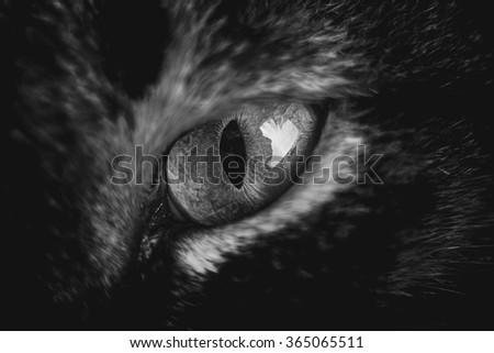 Cat eye.Macro shoot of cat eye in black an white. - stock photo