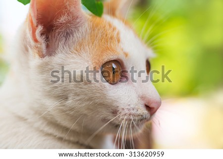 cat eyes closeup - stock photo