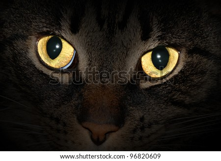 Cat eyes glowing in the dark - stock photo