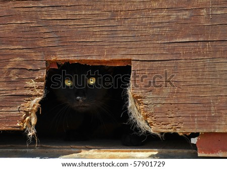 Cat eyes hidden in shadow behind an old barn. - stock photo