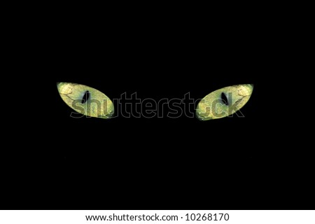 Cat eyes in the Dark - stock photo