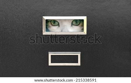 cat eyes locked in filing cabinet - stock photo