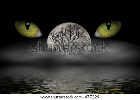 Cat eyes watching while a misty fog rolls in and the moon rises