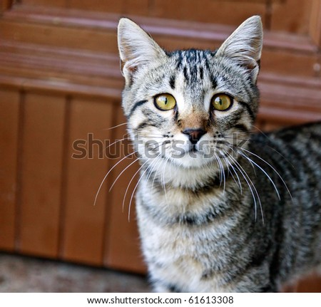 cat face - stock photo