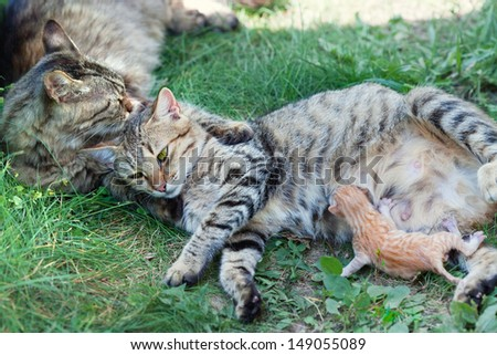Cat family. Mother father and newborn baby. - stock photo