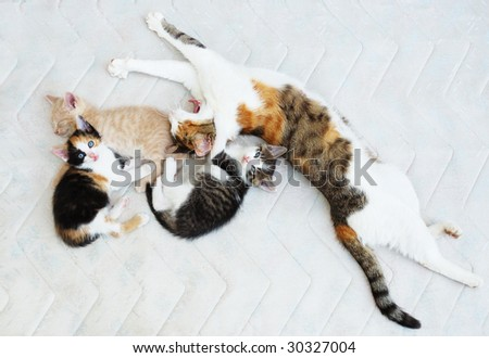 Cat family with three kittens resting on the bed. - stock photo