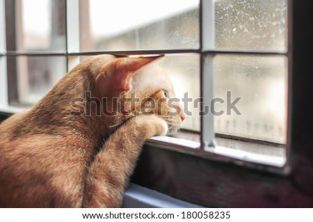 Cat feel lonely - stock photo