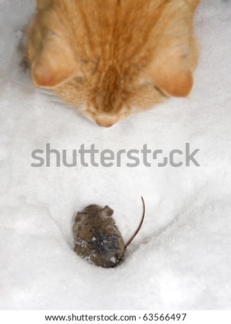 cat fish mouse - stock photo