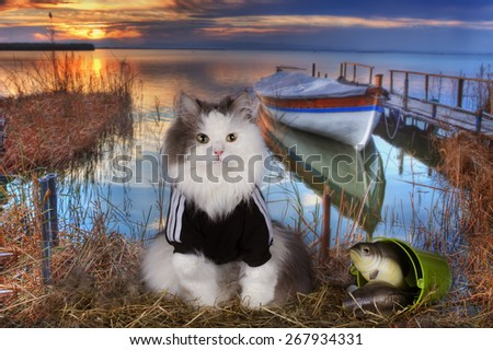 cat fishes in a pond at sunset - stock photo